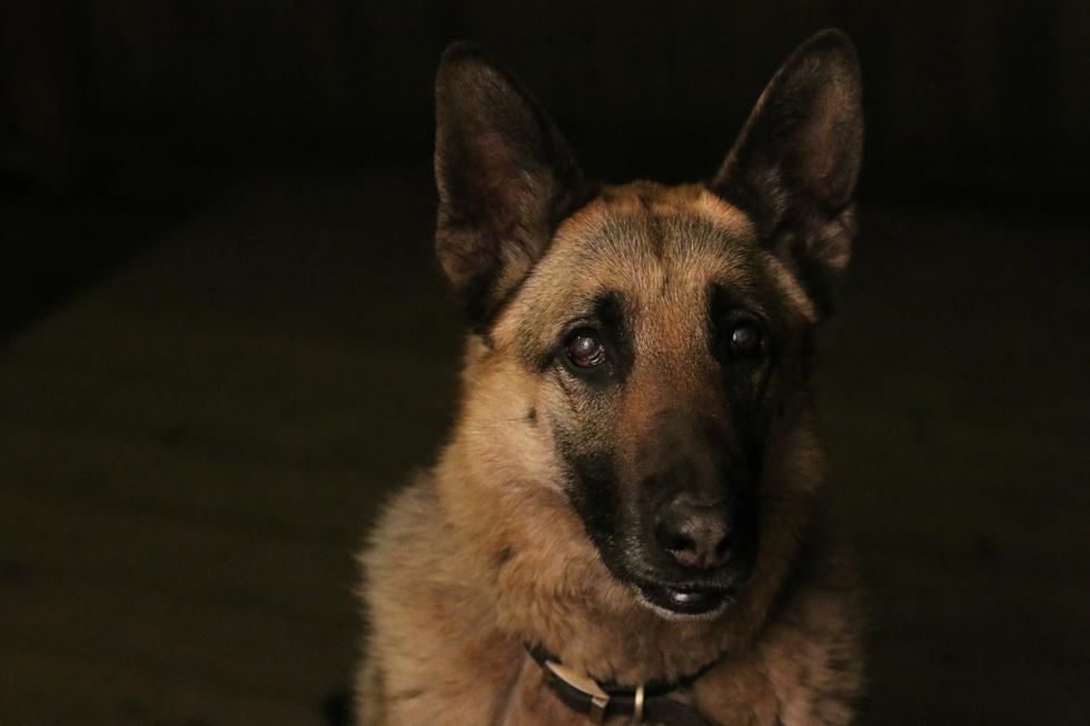 הזוכים בתחרות צילום כלבים בבריטניה (צילום: Mariah Mobley ©   Dog Photographer of the Year 2018)