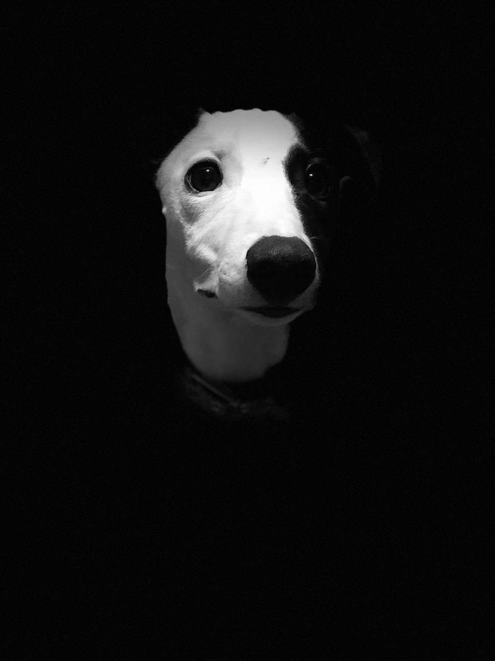 הזוכים בתחרות צילום כלבים בבריטניה (צילום: Sienna Wemyss ©   Dog Photographer of the Year 2018)
