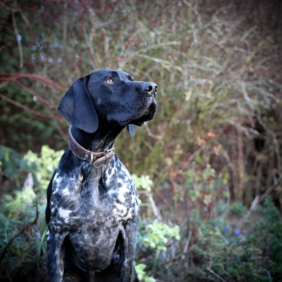 הזוכים בתחרות צילום כלבים בבריטניה (צילום: Maisie Mitford ©   Dog Photographer of the Year 2018)
