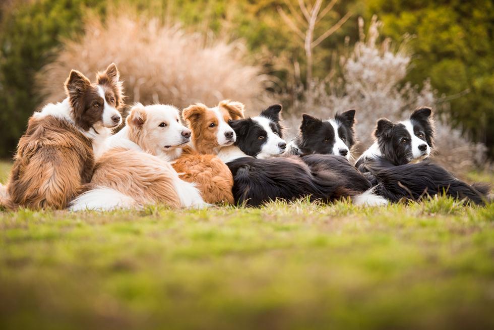 הזוכים בתחרות צילום כלבים בבריטניה (צילום: Tamara Kedves ©   Dog Photographer of the Year 2018)