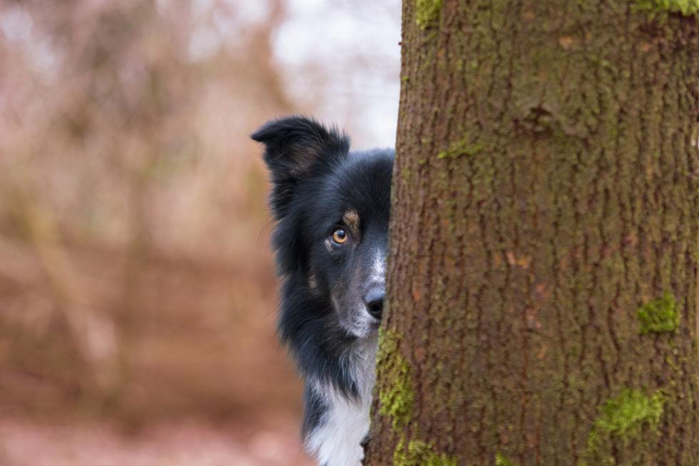 הזוכים בתחרות צילום כלבים בבריטניה (צילום:  Kirsten van Ravenhorst ©   Dog Photographer of the Year 2018)