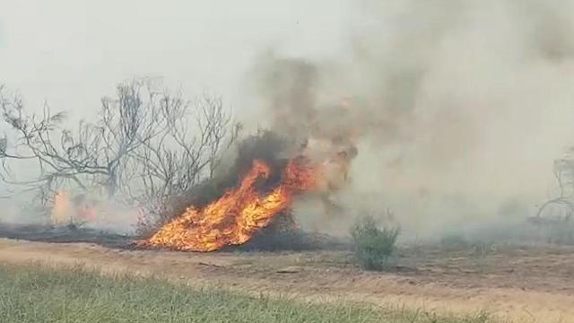 Fire caused by incendiary kite (Photo: Barak Shaham/Nature and Parks Authority)