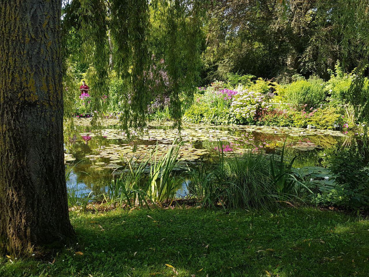 חבצלות המים בגן היפני של קלוד מונה בז'יוורני (צילום: אחיה ראב