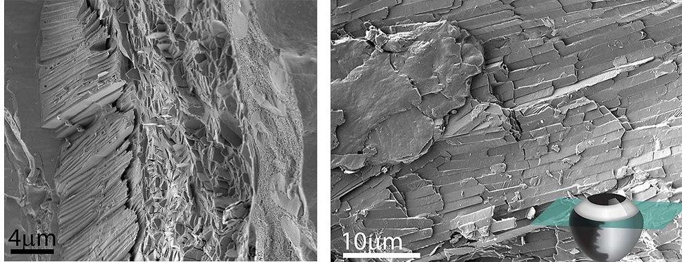 קשתית הדג כפי שהיא נראית תחת מיקרוסקופ אלקטרונים סורק. מימין: השכבה החיצונית המרוצפת גבישי גואנין דקים, משמאל: חתך רוחב המציג שלוש שכבות נפרדות (צילום: מסע הקסם המדעי, מכון ויצמן)