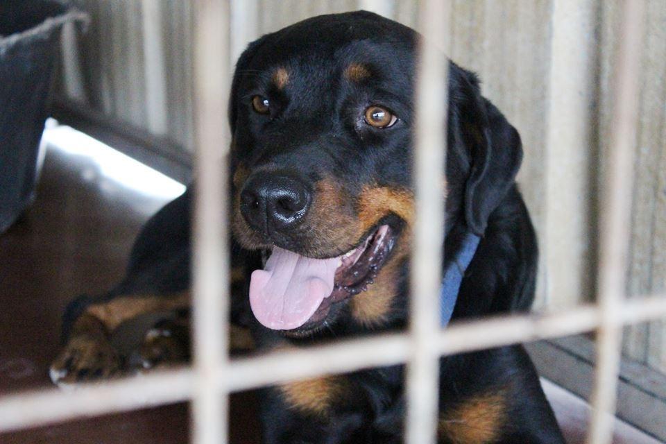כלב הילטון מחכה לאימוץ (צילום: תנו לחיות לחיות)