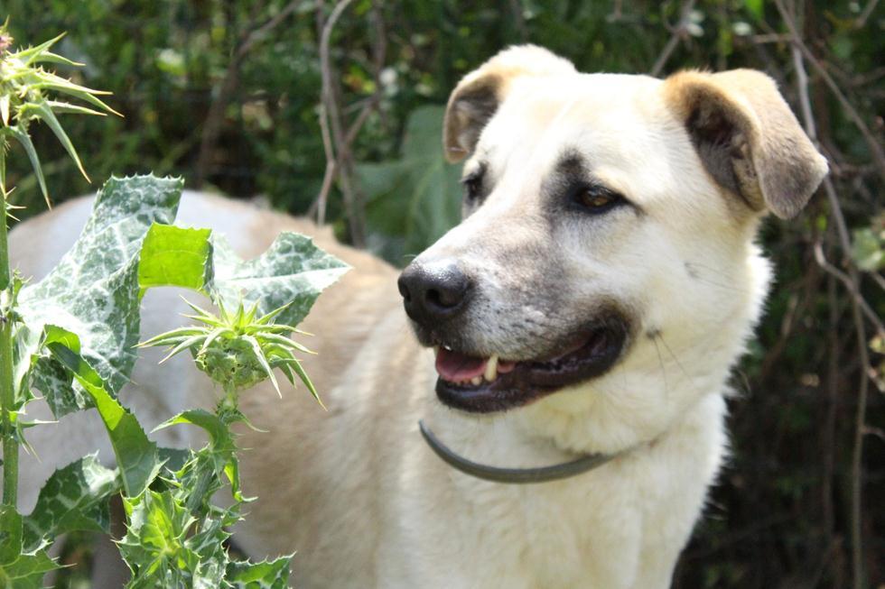 כלב יוגי מחכה לאימוץ (צילום: תנו לחיות לחיות)