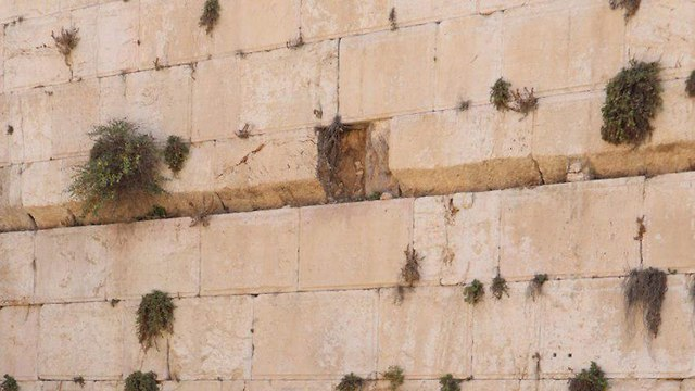 The Western Wall (Photo: TPS)