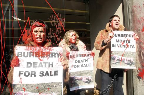 מפגינים נגד ברברי לאורך שנים. ארגון PETA (צילום: AP)