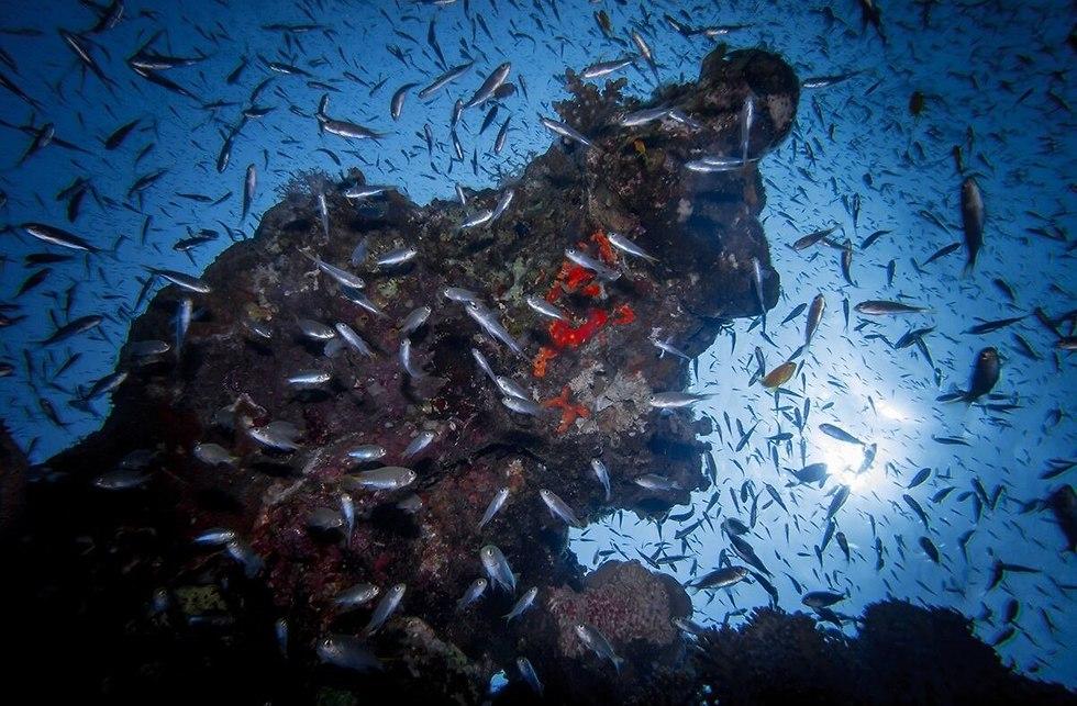 שונית האלמוגים באילת (צילום: עמרי יוסף, רשות הטבע והגנים)