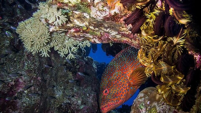 The coral reef in Eilat (Photo: Nature and Parks Authority)