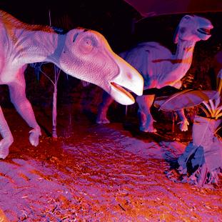 גן גורו | צילום: נדב כפיר