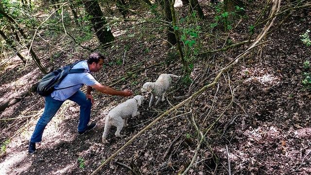 אלבניה פטריות כמהין מלחמה בתוך היער (צילום: AFP)