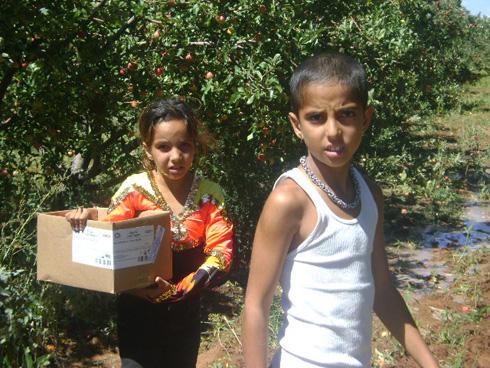 נוגה וגל בקטיף אפרסקים במטע נטוש בקולורדו (צילום: אילני אילן)