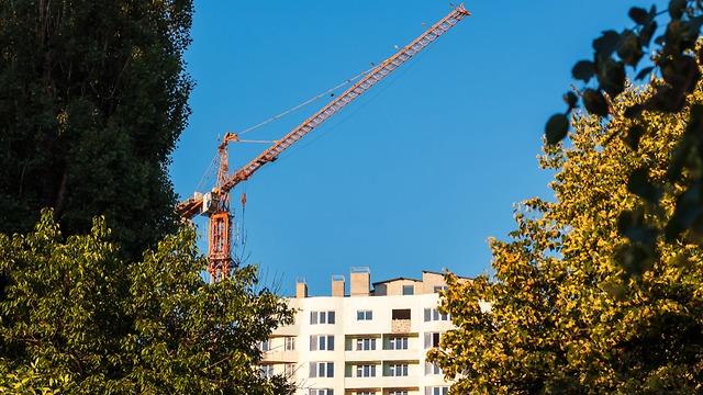 עצים ליד אתר בנייה (צילום: shuttertock)