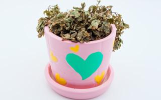 DIY (צילום: Shutterstock)