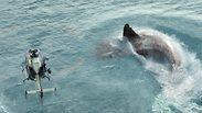 כריש לא מדמם