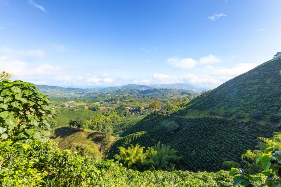 חקלאות בקולומביה ()