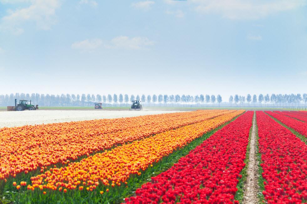 שדות פרחים ()