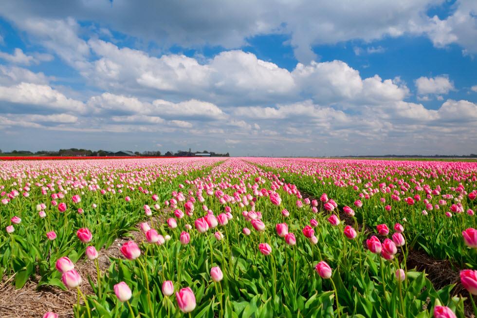 פרחים שדות פרחים ()