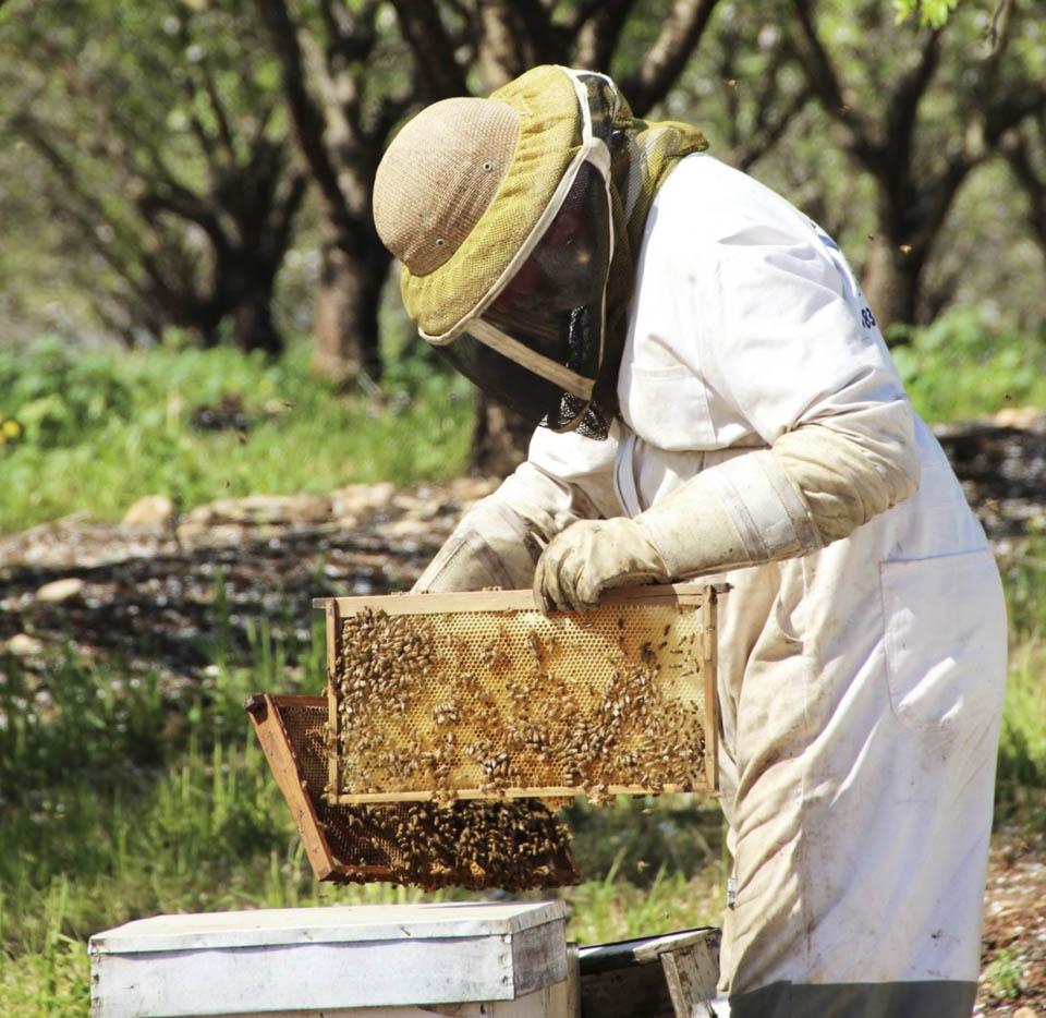 Фото: пресс-служба Совета израильских пчеловодов