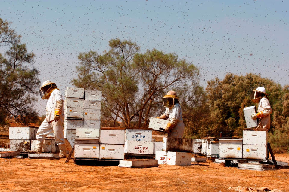 Фото: Совет пчеловодов Израиля