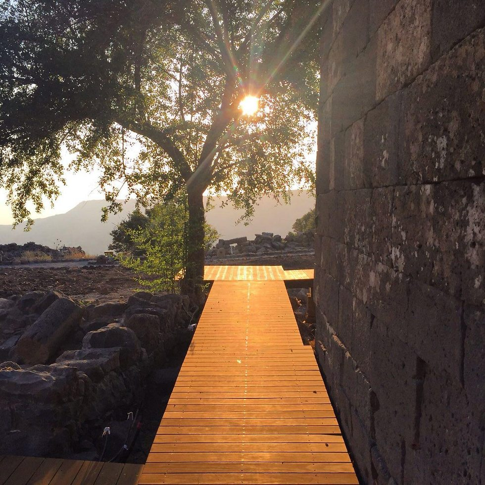 שבילי ההליכה החדשים באתר (צילום: שירה רז פריינד)