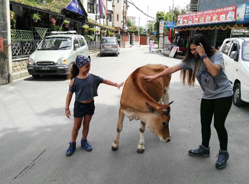 אריאל ועמית במפגש ראשון עם פרה ברחוב בנפאל. נגה: בהמשך בהודו, היינו צריכים להזכיר לעצמנו שזה לא רגיל שפרות מסתובבות ככה ברחובות (צילום: שטרית בדרכים)