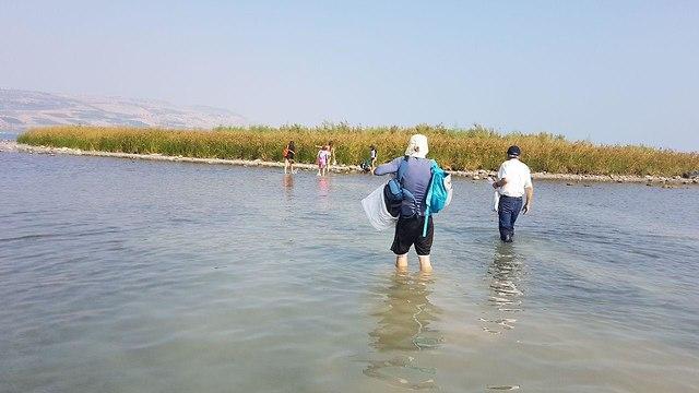 אי חדש נוצר בכנרת מול חוף בקיבוץ מעגן מיכאל (צילום: אסף קמר)