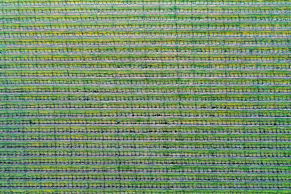 מראה מהאוויר של של כרם הרוח ברמת הגולן, בעונת הזמירה. האלבום בן 288 העמודים כולל צילומי ''שטיחים'' מרהיבים, מעשה ידי האדם והטבע (צילום: אילן נחום)