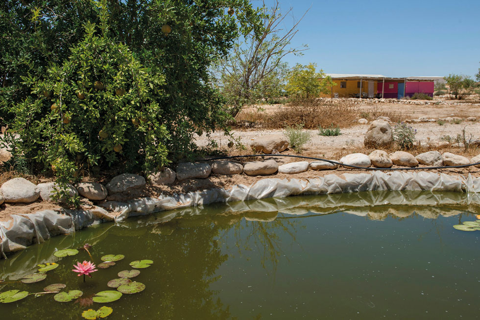 יקב רוטה בנגב, סמוך לקיבוץ רביבים. כמו כרמי עבדת, גם זוהי חוות בודדים, חלק מפרויקט ''דרך היין'' (צילום: אילן נחום)
