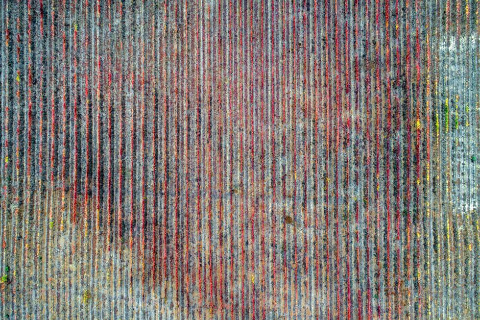 מבט על כרם בתל פארס (רמת הגולן) בשלכת, חודשיים אחרי הבציר (צילום: אילן נחום)