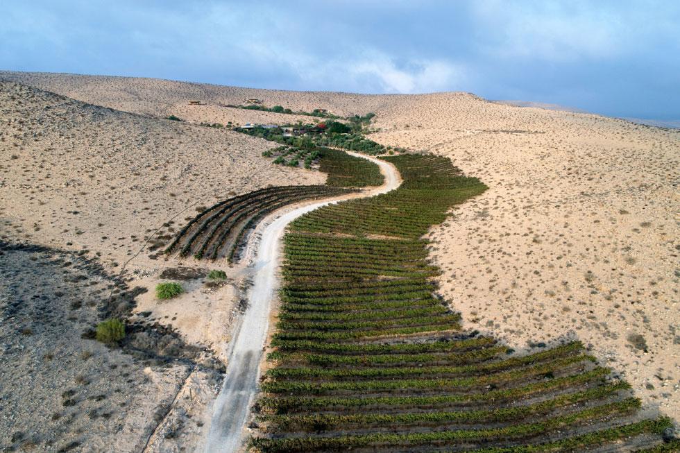 וגם במדבר: חוות הבודדים כרמי עבדת הוקמה לפני 20 שנה בערוץ נחל סמוך לשדה בוקר, על שרידיה של חווה חקלאית מהתקופה הביזנטית. אנשי החווה משתמשים בטראסות ובמנגנוני ההשקייה העתיקים, המבוססים על מי שטפונות (צילום: אילן נחום)