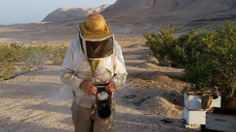 חלקאים מים המלח הצליחו להפיק דבש מעץ לבונה (צילום: גיא ארליך)