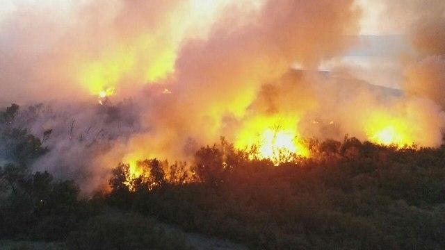 שריפה בעינות צוקים (צילום: ארז ברוכי רשות הטבע והגנים)
