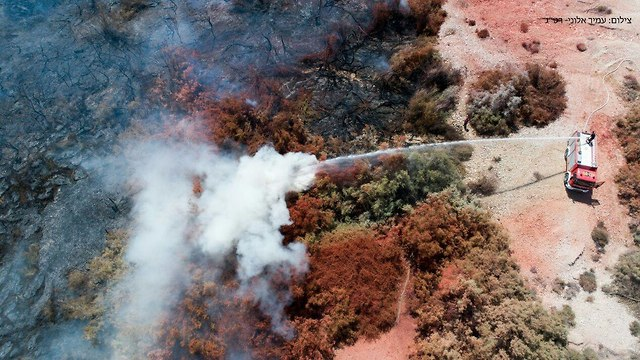 Пожар в заповеднике. Фото: Амир Алони (Photo: Amir Aloni)