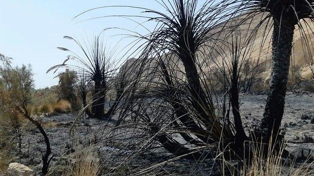 נזקים של השריפה בעינות צוקים (צילום: יניב כהן, רשות הטבע והגנים)