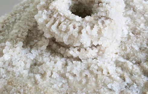 הליפה סופחת אליה את המלח כספוג (צילום: daniel kukla)
