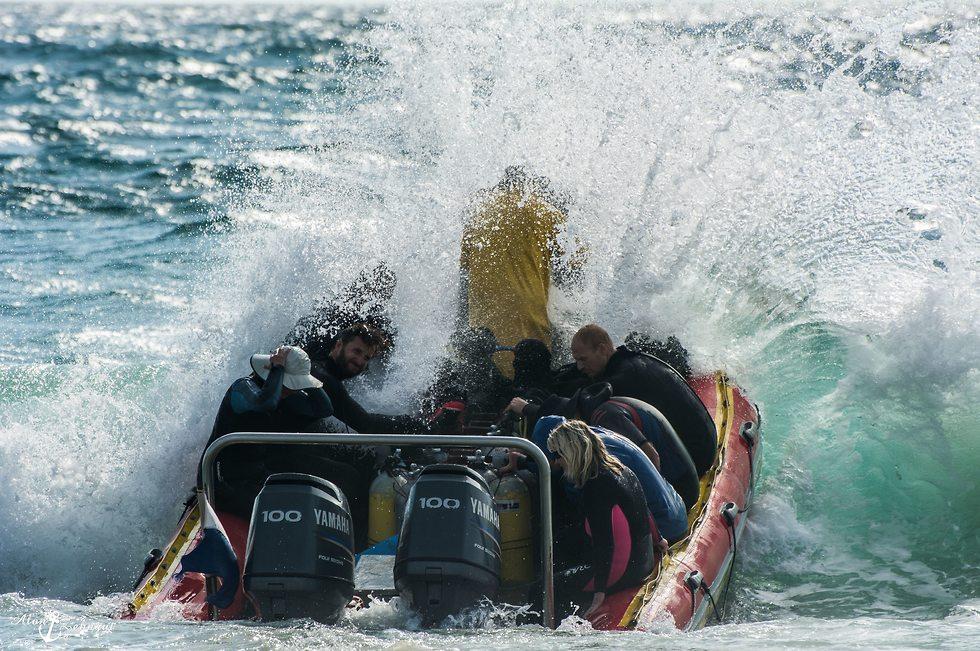 טיול צלילה במוזמביק (צילום: אלון צנגוט)