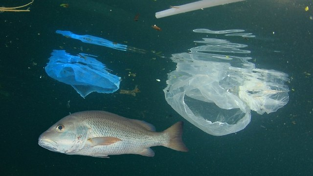 Plastics at sea (Photo: Shutterstock)