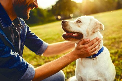 טיפול בכלב מפחית את הסיכון של רווקים למחלות לב ב־36% ולמוות בכלל ב־33% (צילום: Shutterstock)