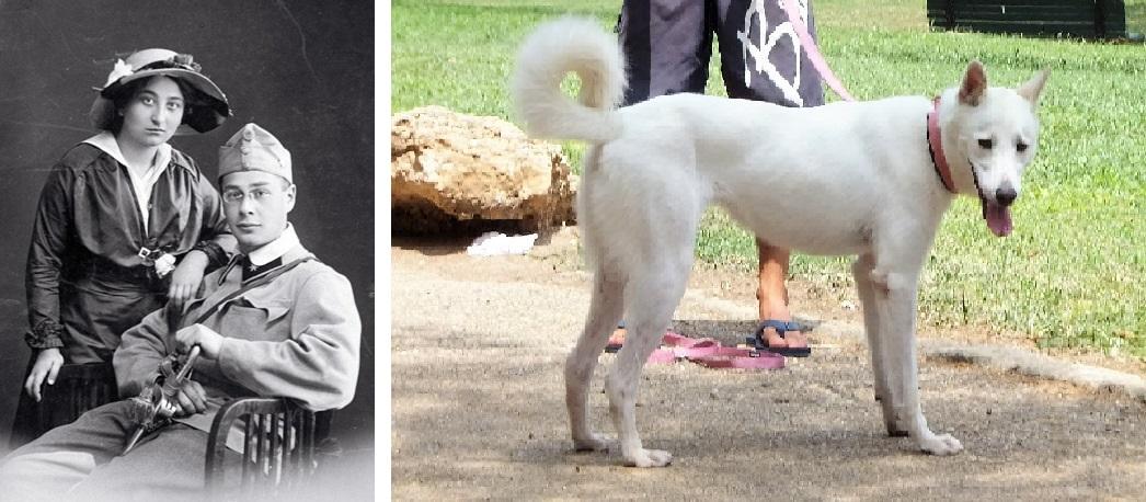Cупруги Менцель и ханаанская собака в наши дни. Фото: Википедия, Леон Левитас