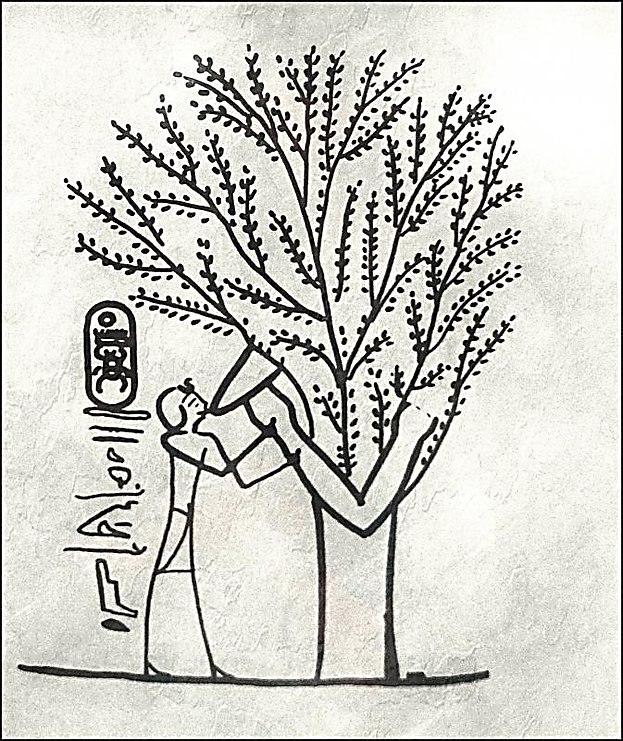 ציור קיר מקברו של תחותימוס השלישי, (מאה 15 לפי הספירה) האלה מניקה את המלך
