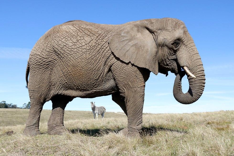 טיול בדרום אפריקה (צילום: אביב הברון)