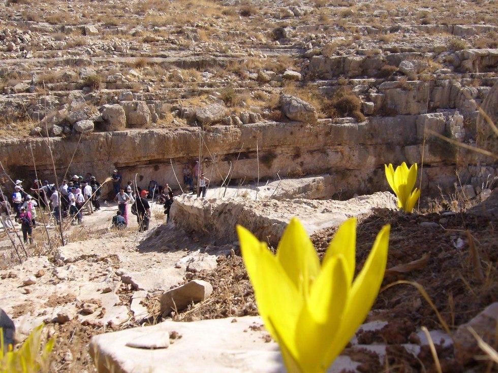 חלמניות בגוש עציון (צילום: תיירות גוש עציון)