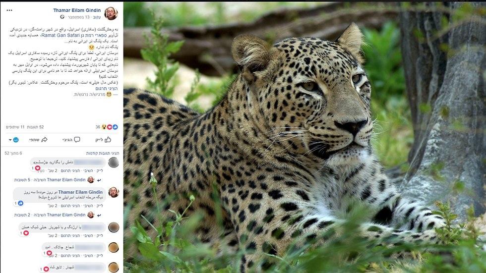 הצעות לשמות לנמר מתוך עמוד הפייסבוק של תמר עילם גינדין (צילום מסך)