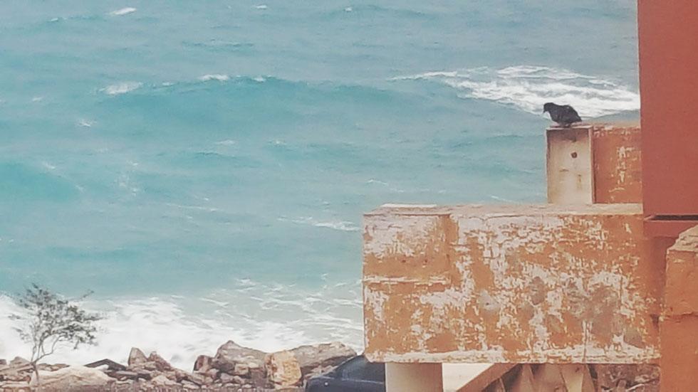"""תמונה מרמב""""ם. הנוף שנשקף מחלון חדרה של מיכל ארן ז""""ל בבית החולים בחיפה (צילום: עופרה עופר אורן)"""