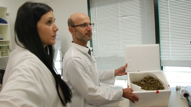 Researchers at CannRx labs in Jerusalem show their facilities (Photo: David Rawlings)