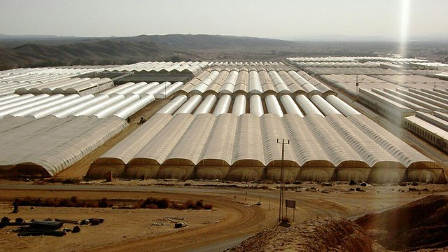 L'agriculture dans l'enclave jordanienne (Photo: Conseil régional d'Arava)