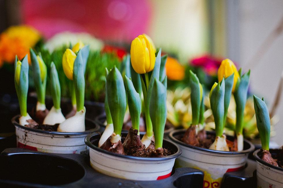 צבעוני (צילום: Shutterstock)