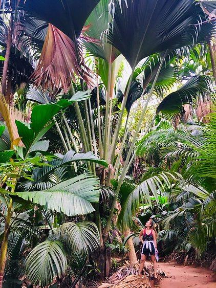 שמורת וליי דה מאי: ענפי עצי הקוקוס בגובה עצום